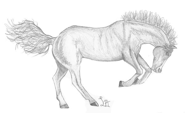 bucking horse sketch by ladyano