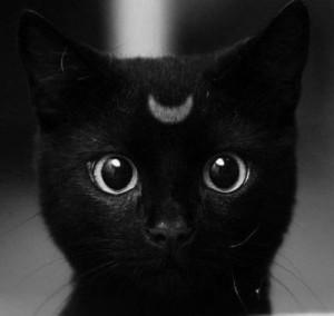 catplu's Profile Picture