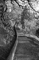 stairs by moule