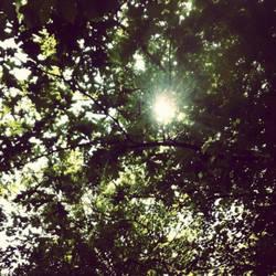 Through The Tree Tops.
