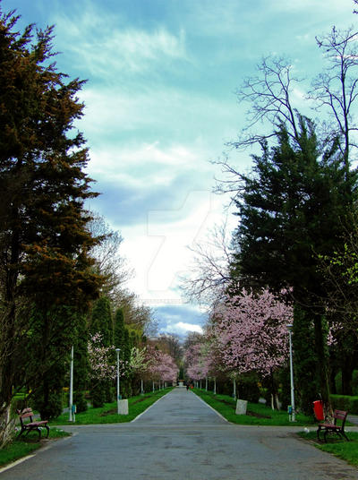 Primavara in Parcul Cancicov