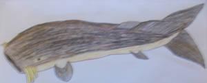 Whale Catfish