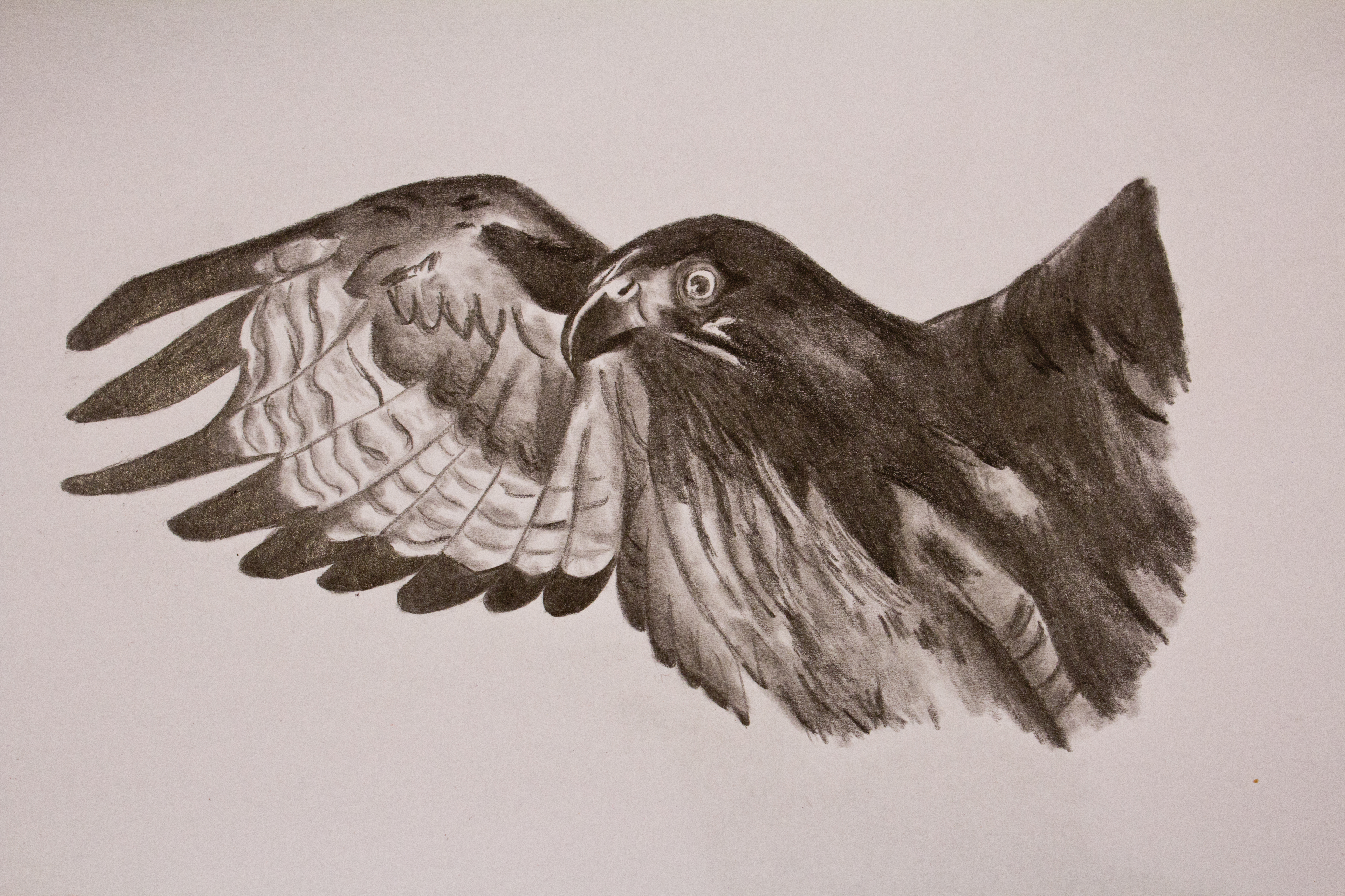 Eagle by paulinapl87