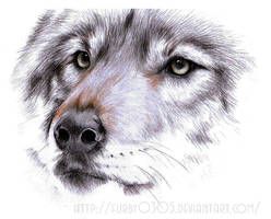 Wolf by Furby0305