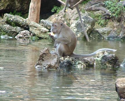Florida Monkey 2