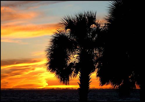 Florida Palm Tree Sunset
