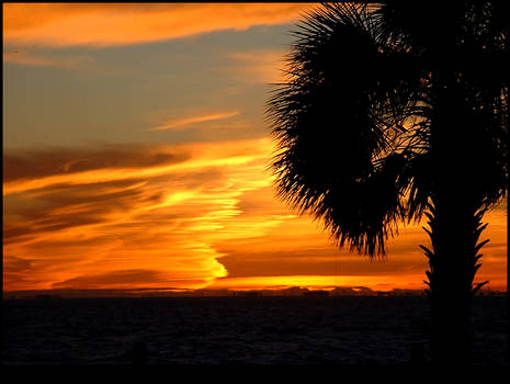 Florida Palm Tree Sunset 2