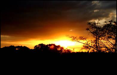 Florida Tree Sunset