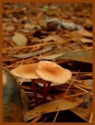 Fall Leaves and Mushrooms