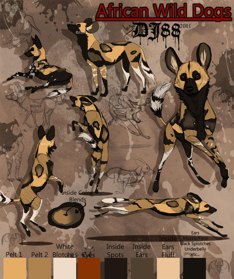http://th08.deviantart.net/fs70/PRE/f/2011/166/9/4/african_wild_dogs_by_dj88-d3izcr9.jpg