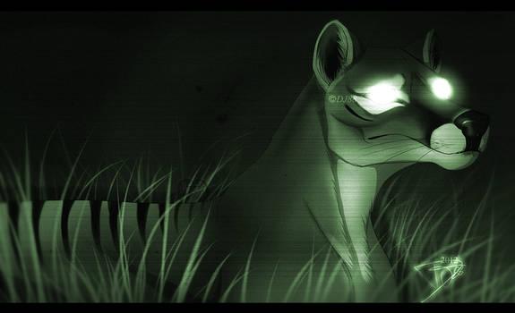 Thylacine NightCam 2
