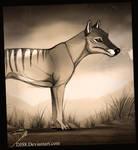 ....Thylacine....