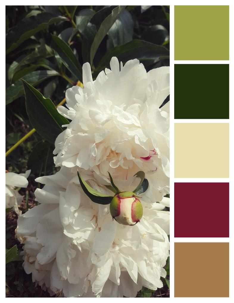 Peonies Palette by Lemon-Heartss