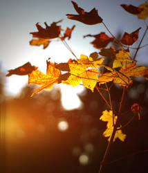 Autumn by pix-cel