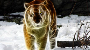 White-And-Orange-Tiger-Mixed-Glowing-In-Slow-Mo