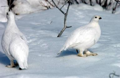 Birds in white