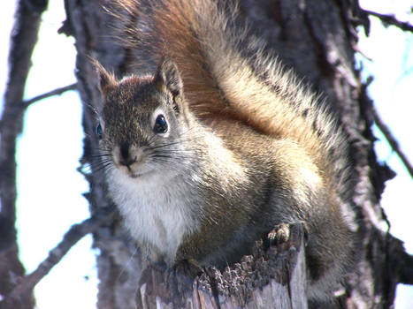 My friend the Squirrel