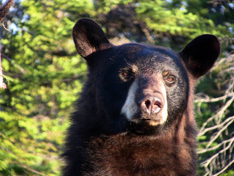 Face to face with a bear