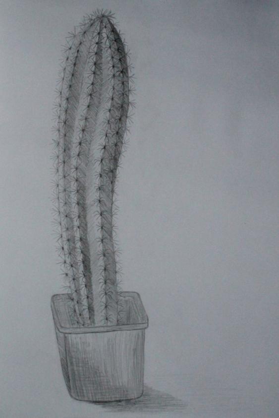 Kaktus-chan xD by Hidagakas