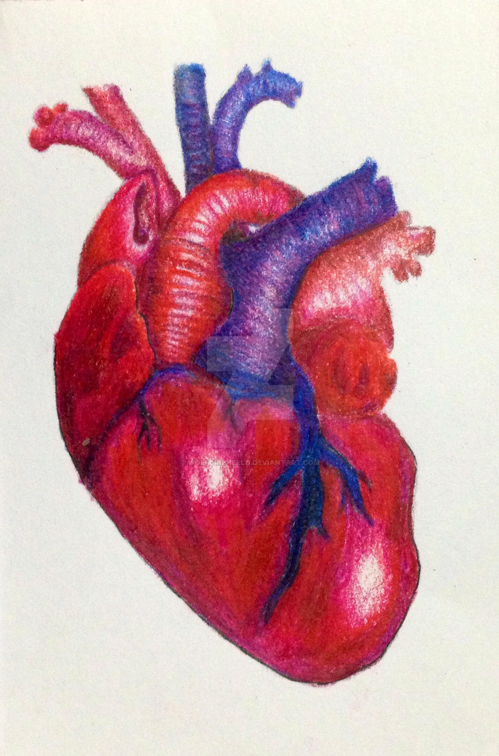 realistic heart colored by wolfgirlhello on deviantart