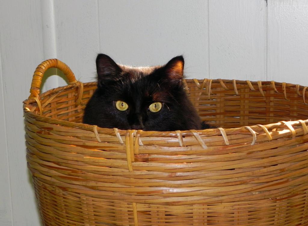 Basket case. by KittyGreenEyes