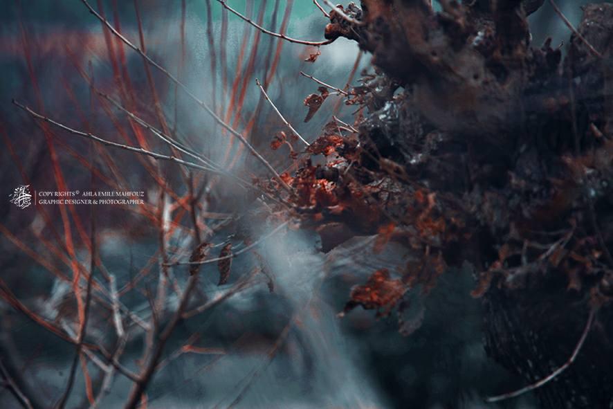 Ahla_fog_ by 2a7la