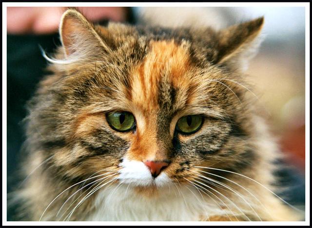 katten by Roberth