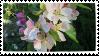 apple blossoms stamp by hyenatxt