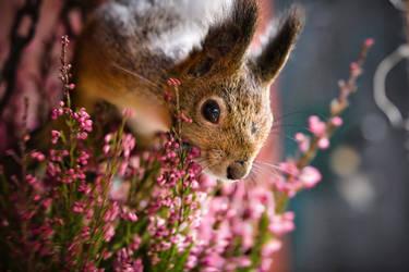 Squirrel VII by sampok