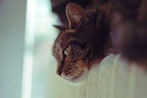 lazy days by justashadowleft
