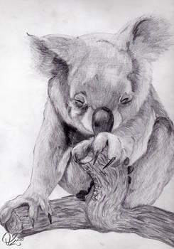 Animals: Koala