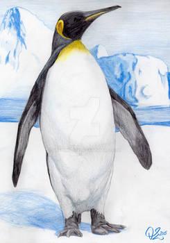 Animal: Penguin