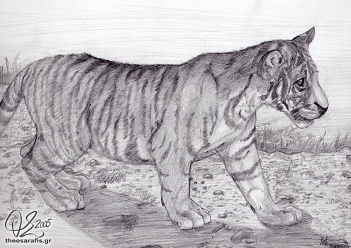 Animal: Tiger