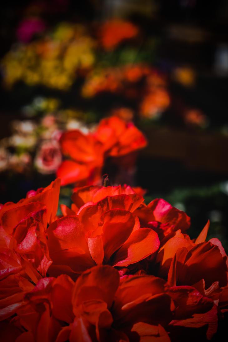 red by MarissaAngell