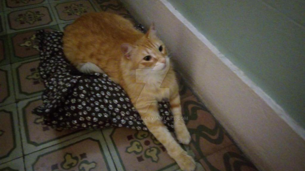 my cat by Die-Rose