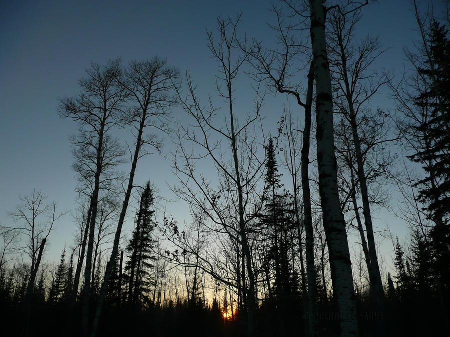 Trees by Deena-Lee-Sauve