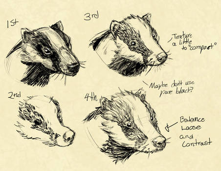 European badger studies