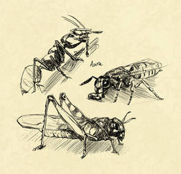 Insect sketchpage