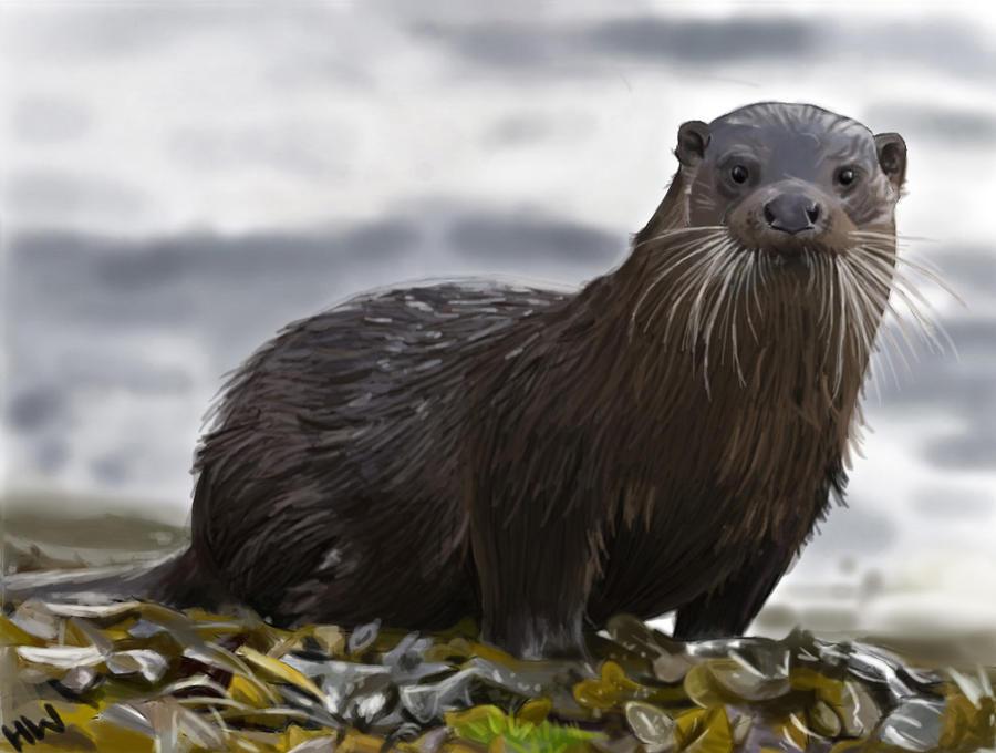 Otter by xXhayleyroxXx