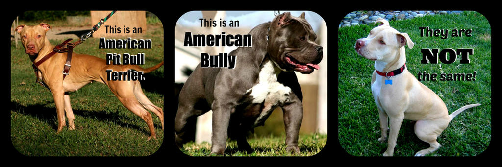 American Pit Bull Terrier and American Bully by Thylacinus1 on ...