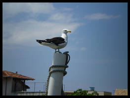 Seagull by bibiana-tenebra