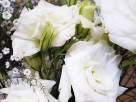 White Day by bibiana-tenebra