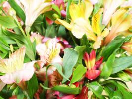 Spring Garden by bibiana-tenebra