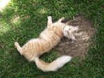 Mia on grass by bibiana-tenebra