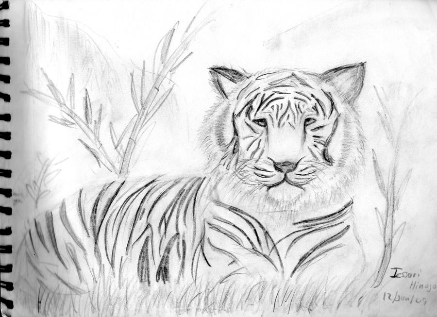TIGRE DE BENGALA BLANCO xD by ~nana135 on deviantART