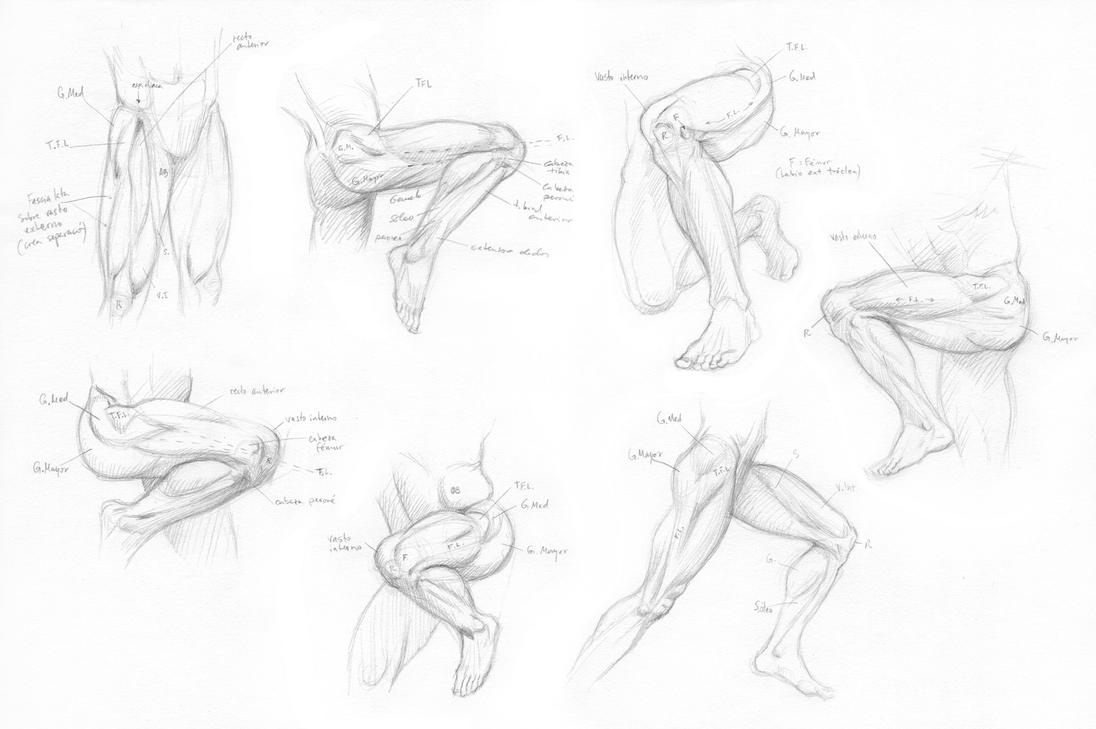 Upper leg anatomy - fascia lata in motion poses by Almayer