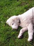 Zeus - The Dog