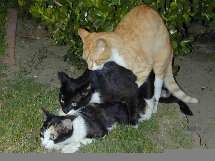 cat threesome by sthrncomfort