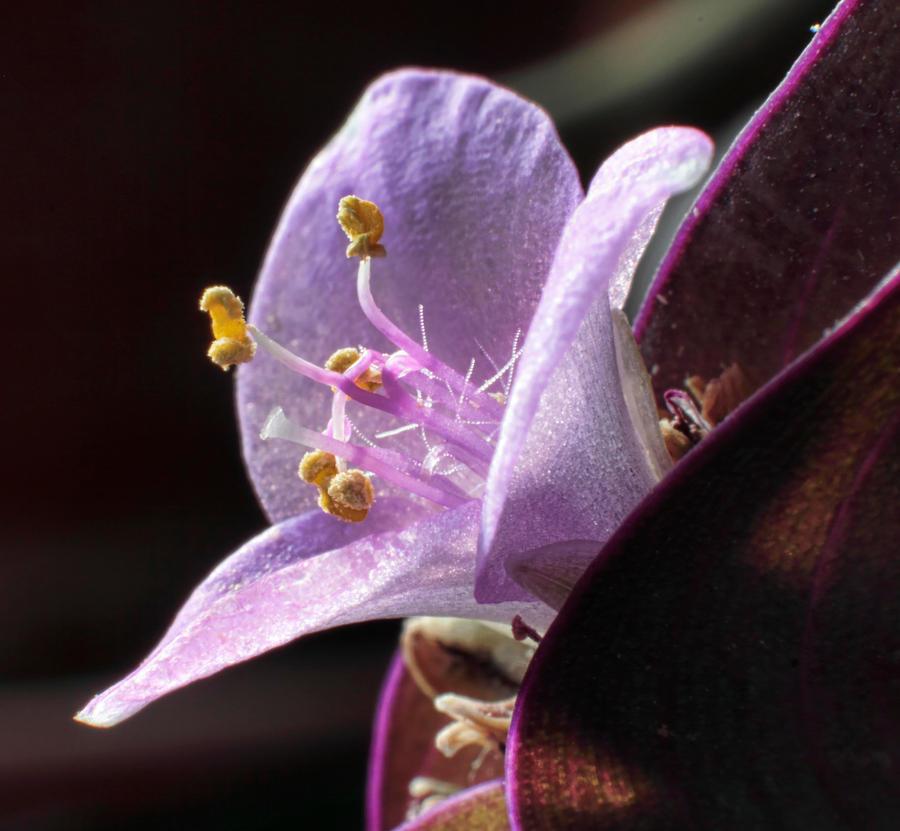 Purple Flower wallpaper > Purple Flower Papel de parede > Purple Flower Fondos