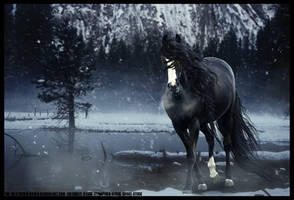 A MOMENT OF STILLNESS by THE-WEATHERED-RAVEN